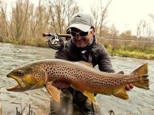 Trophy trout fished with streamer in the tailwaters streams. River Segre.