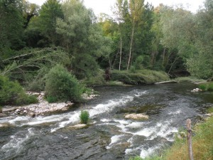 A beautiful stream in Ter River