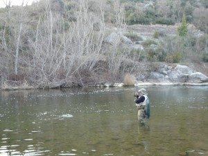 A large brown trout fished with an emerger in river Segre