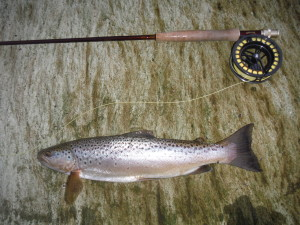 A good fish catched at long distance