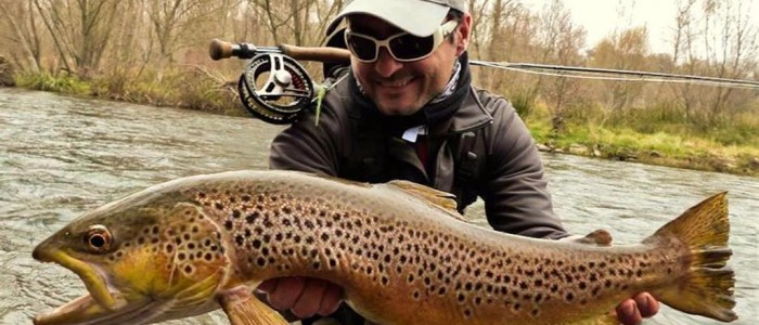 LARGE TROUT IN RIVER SEGRE