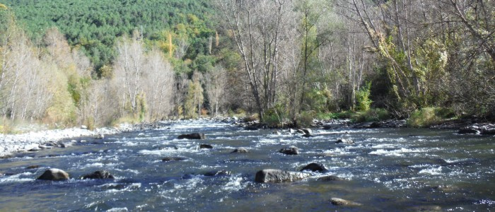 """The Feel of Fly Fishing"" (Poem)"
